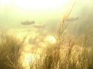 Flusstauchen_6