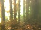 Flusstauchen_9